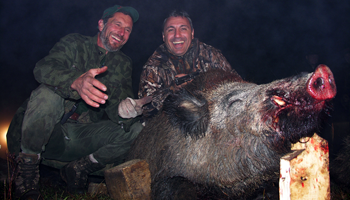 Wild Boar Individual Offer