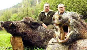 Wild Boar Trophy Hunting