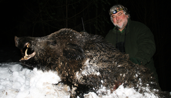 Wild Boar Hunting Offer